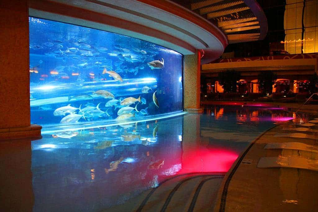 the shark tank at the golden nugget